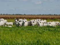 Governo do Tocantins aponta avanços das tecnologias na agropecuária sustentável no Estado
