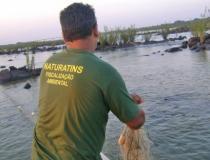 Governo do Tocantins prorroga período da piracema por mais 30 dias