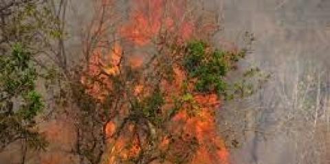 Vereador  Filipe Fernandes pede solução para o alto índice de queimadas na capital