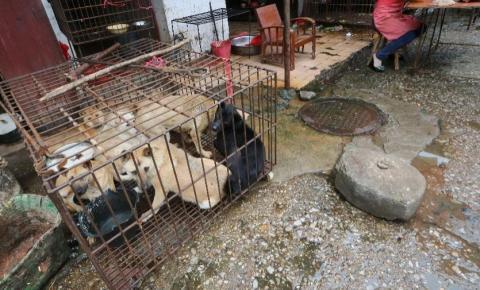 Norte-coreanos são forçados a entregar cachorros de estimação a restaurantes