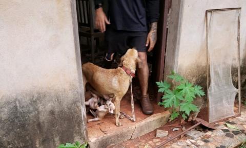 Após decisão da Justiça, animais vítimas de maus-tratos em residência de Araguaína são resgatados
