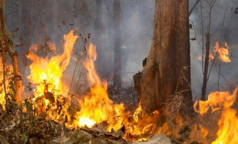 Curso de brigadista de combate a incêndio vai atender trabalhadores rurais