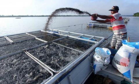 """Governo do Tocantins libera 10 milhões para Fomento atender aos projetos aprovados do """"Programa Tilápia: vida na água"""""""